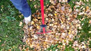 Fall Yard Clean Up Red Deer