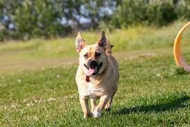 Oxbows Off Leash Dog Park Red Deer
