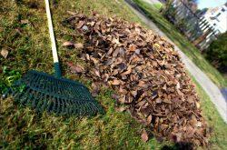 Fall Yard Clean Up Red Deer