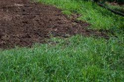 Lawn Fertilizer Service Red Deer